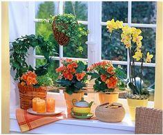 Как добиться цветения домашн…