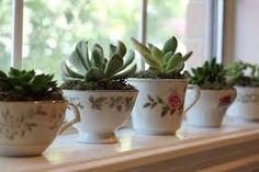 la collezione di tazzine spaiate vi occupa posto? trasformatele in vasetti per micro piante grasse.Effetto wow assicurato!