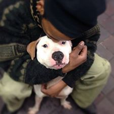 URGENT - Manhattan Center    PRINCESS - A0991471   SPAYED FEMALE, WHITE, PIT BULL MIX, 3 yrs  OWNER SUR - EVALUATE, HOLD RELEASED Reason NO TIME   Intake condition NONE Intake Date 02/11/2014, From NY 10027, DueOut Date 02/11/2014 https://www.facebook.com/Urgentdeathrowdogs/photos_stream