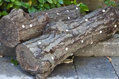 Shiitake Mushroom Logs » FreestyleFarm