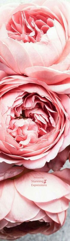 Color Palette Pink: Fashion, Beauty, Accessories, Home Decor and Nature in shades of Pink. Rose Wallpaper, Cellphone Wallpaper, Flower Pictures, Here Comes The Bride, Love And Light, Natural World, Line Art, Pink Roses, Flower Art