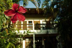B & B, Costa Rica, Studios, Facebook, Plants, Plant, Planting, Planets