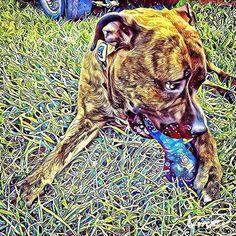 Pitbull rescue friends on Instagram See More at fb.me/pitloversclub #pitbull #pitbullsofinstagram #pitbulls #pitbulllove #pitbulladvocate #pitbulllife #pitbullsofig #pitbullpuppy #pitbullmom #pitbullmix #pitbullsofficial #pitbullpride #pitbullinstagram #pitbulllover #pitbulllovers #pitbullnation #pitbullgram_ #pitbullterrier #pitbullgram #pitbullfriends #pitbullsarelove #pitbullrescue #pitbullvixens #pitbullove #pitbullproblems #pitbullfamily #pitbullmommy #pitbullsofinsta #pitbullsrule…