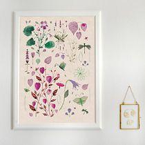 GRAFIKA 50x70 botaniczna, filtr