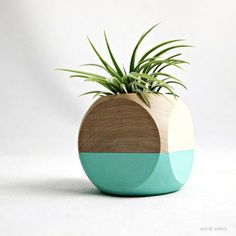 Beautiful Plants, Beautiful Containers