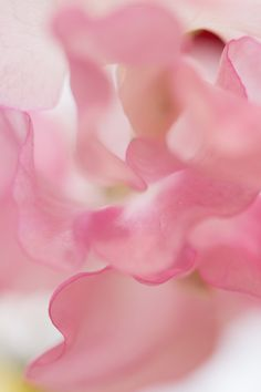 SWEETPEA FLOWER MACRO PHOTOGRAPHY
