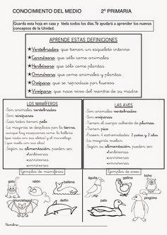 Action Verbs, Science And Nature, Second Grade, Social Studies, Elementary Schools, Homeschool, Cool Kids, Roman, Bullet Journal