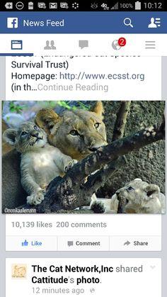 Lioness & cubs.