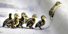 I will own these cuties one day, they are, quackie, wackie, smackie, climber, slipper, feather, waddle, spastic, and fluffy