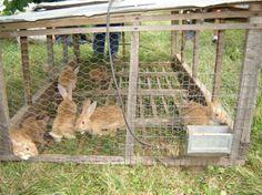 Pastured Rabbits & Rabbit Tractors