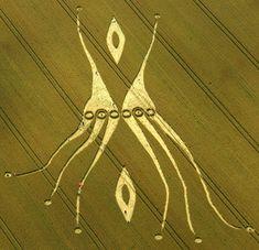 agroglyphe