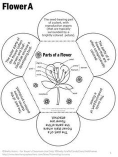 Anatomy of a flower study card and diagram to label