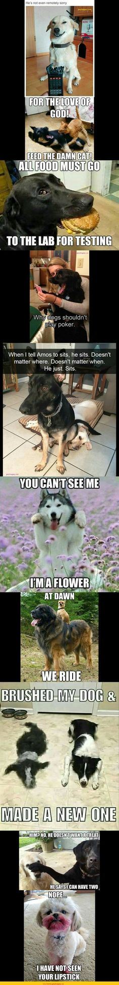 Top 10 Funny Pictures Of The Day ft. Funny Dogs