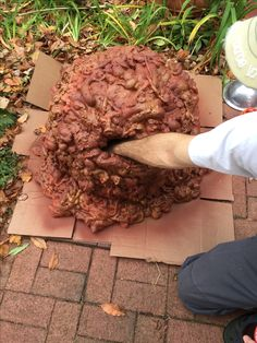 Triceratops Poop - DIY with chicken wire and spray foam insulation! Birthday Party At Park, 5th Birthday Party Ideas, Halloween Party Themes, 30th Birthday Parties, Dinosaur Birthday Party, Halloween Treats, 4th Birthday, Dinasour Birthday, Truck Or Treat