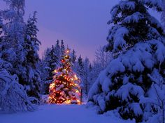 Sapin de Noël - fonds d'écran gratuit: http://wallpapic.be/haute-resolution/sapin-de-noel/wallpaper-2846