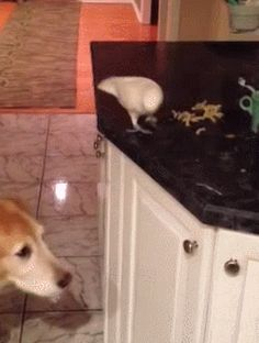 Bird feeding dog noodles