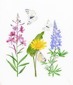 Okanagan, BC wildflowers and butterflies