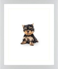Terrier Puppy Framed Print, White, Contemporary, Cream, White, Single piece, 16 x 20 inches