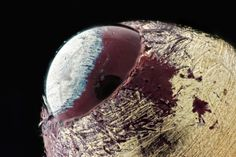 11 Macro Photos Reveal The Hidden World Around Us - Page 2 of 5