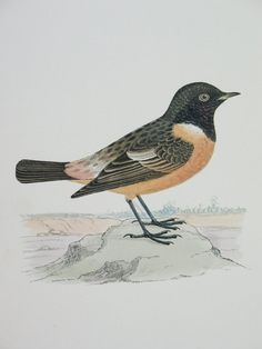 Bird Print Bird Art Print Stonechat Bird by FindingMaineVintage