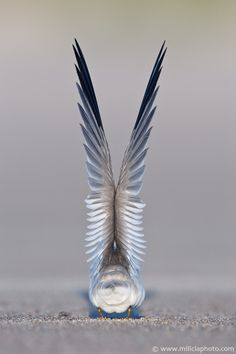 Gorgeous photo of a crane by Michael Milicia.