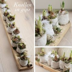 Do you bring home flower bulbs? See here 10 sweet flower bulbs decoration idea Deco Floral, Arte Floral, Wedding Table Centres, Deco Champetre, Diy Ostern, Easter Flowers, Table Centers, Bulb Flowers, Easter Crafts