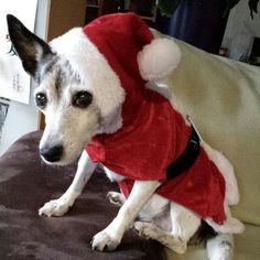 Lucy (14), beste Freundin von Angie, als Weihnachtswichtel 2014 - aufgenommen 2015 vom Immobilienmakler in Hannover: arthax-immobilien.de
