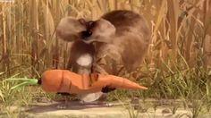 Komik Hayvan Animasyonu - HD (kısa film)