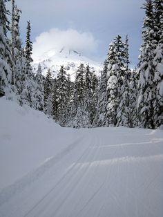 Tea Cup Lake Nordic ski trail, Mt. Hood in the background