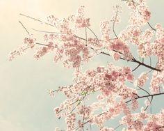 Cherry Blossom Art Cherry Blossom Photo nature by SeeLifeShine, $25.00