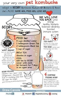 Kombucha it is amazing, we love it : Kombucha tea (KT): Recipe – How to – Ideas – Probiotic – SCOBY