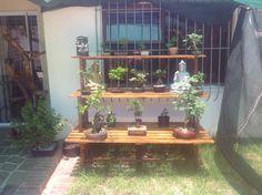 My bonsais coming along ;)