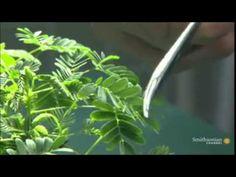 Voyager - Il mistero delle piante intelligenti - 1 di 3. - YouTube