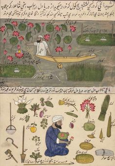 Harvesting from a Kashmiri lake. Food and flowers and tools identified by name in arabic. 1850