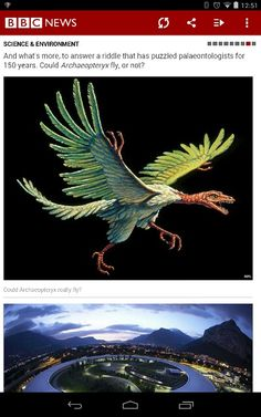 Archeopterix. One crazy looking chicken.