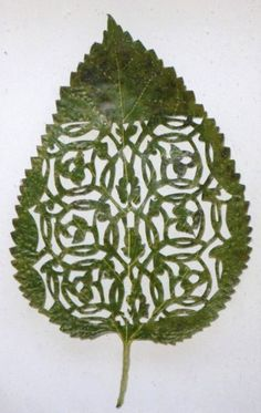 amazing leaf art.
