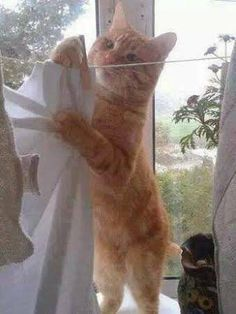 5b1a7719f053e1233a59d37c4db2fd9f--hanging-clothes-cute-cats.jpg (236×314)