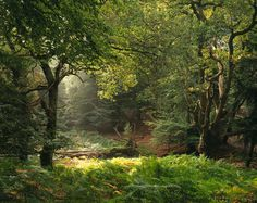 The solitude of an English forest to walk in. Absolutely amazing.