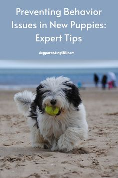 """It's a lot easier to prevent bad behavior than """"fix"""" it later. All you have to do is train your dog! #dogbehavior #puppytraining #trainyourdog Dog Health Tips, Dog Health Care, Pet Sitters International, Group Of Dogs, Cute Dog Photos, Animal Antics, Dog Behavior, New Puppy, Training Your Dog"""