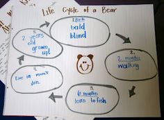 We're Going on a Bear Hunt - life cycle of a bear worksheet ...