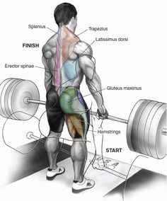 The deadlift.....the king of exercises