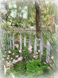 Beautifully weathered white picket fence and sweet flowers all around! Garden Fencing, Garden Art, Garden Landscaping, Garden Design, White Picket Fence, Picket Fences, Colorful Roses, Dream Garden, Belle Photo