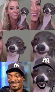 Era uma vez, um cachorro feliz...