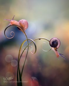 Two Cute Snails (Fauzan Maududdin / Banjarmasin / Indonesia) EOS Macro Photography Tips, Animal Photography, Nature Photography, Levitation Photography, Exposure Photography, Winter Photography, Abstract Photography, Beach Photography, Photography Flowers