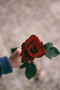 roses | Tumblr