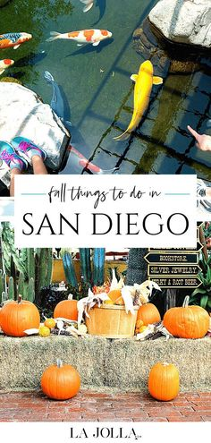 Find the best fall things to do in San Diego including Halloween activities, apple picking, theme park fun, tours, events and more on this annually-updated list. Get all the details here at La Jolla Mom San Diego Beach, San Diego Zoo, Halloween Activities, Autumn Activities, Fall Things, Things To Do, San Diego Activities, Best Mexican Restaurants, Legoland California