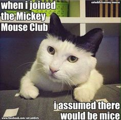 When I joined the Mickey Mouse Club... #catoftheday