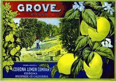 vintage fruit lables riverside california | Main / Corona, Riverside County Grove Lemon Citrus Fruit Crate Label ...