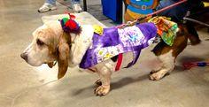 Seattle Kennel Club Dog Show