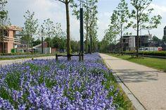 Buro Sant en Co landschapsarchitectuur - Museumlaan, Roombeek, Enschede